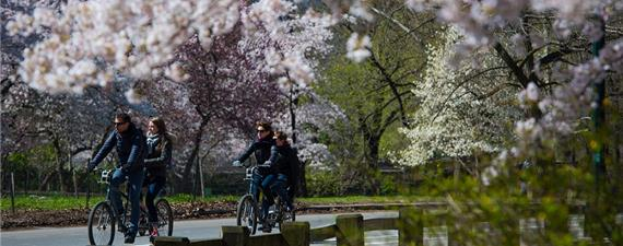 Central Park de Nova York ficará totalmente livre de carros