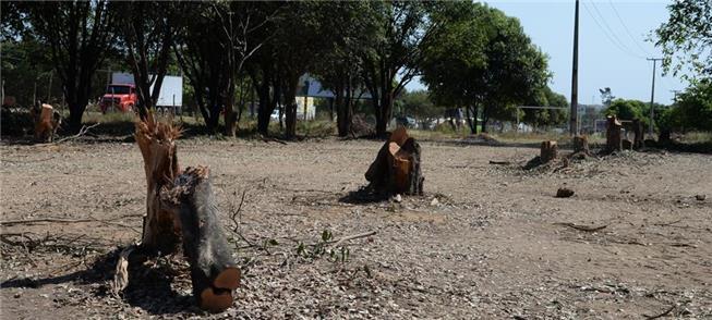 Árvores cortadas terão de ser plantas em dobro