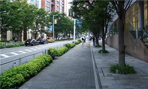Calçadas arborizadas são mais confortáveis para pe