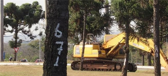 Máquinas já derrubam arborização na área