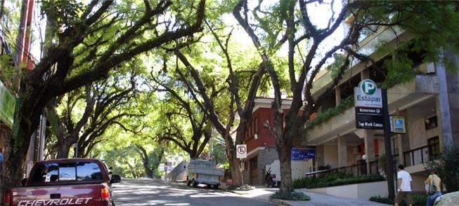 Rua arborizada em Porto Alegre